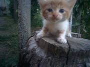 подарю котенка в добрые руки