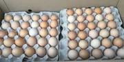 Яйца инкубационные Венгрия Польша Чехия  Бройлер Нпесушка