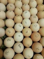 Яйца Инкубационные Бройлер и другие породы